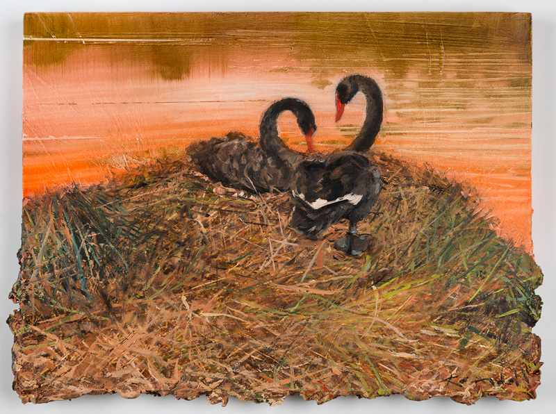 9X12 inches       nesting-swans-south perth.Nov-2016-oil-on-board
