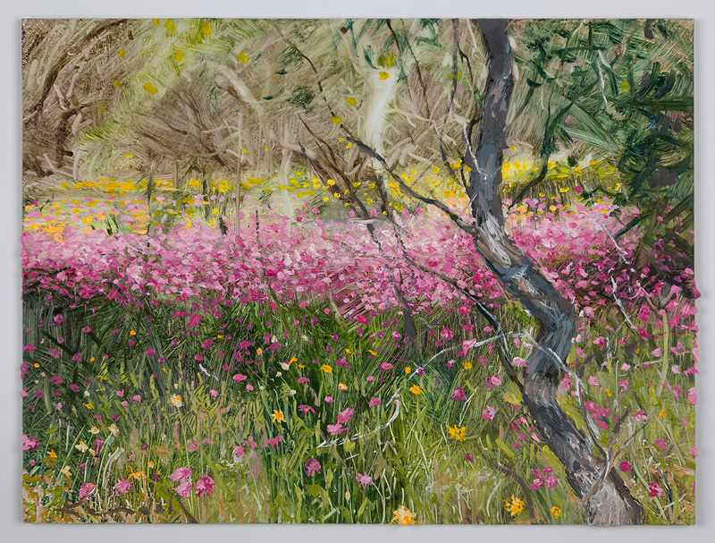 SOLD 9X12 inches pink-everlastings-.badgingarra-nov2016-oil-on-board-